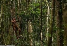 热带雨林当中爬树吃猴子,也是拼了!-轻语博客