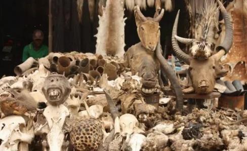 西非多哥共和国的巫术市场